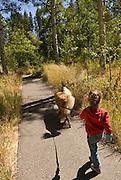 Young girl walking a golden retriever on a trail, El Dorado National Forest, California