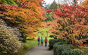 Three women walk under yellow and red fall foliage colors. The Seattle Japanese Garden was completed in 1960 within UW's Washington Park Arboretum. Address: 1075 Lake Washington Blvd E, Seattle, Washington 98112, USA.