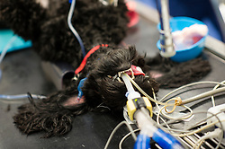 Dog under anaesthetic prior to a procedure at Rushcliffe Veterinary Centre, West Bridgford, Nottingham, UK.<br /> Photo: Ed Maynard<br /> 07976 239803<br /> www.edmaynard.com