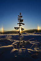 Winter sun dogs at -35C in Whitehorse, Yukon