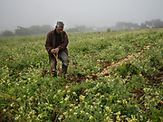 Colin ( Soley ) Thomas, ADA, in Longwood, the biggest farmer of the island.<br /> Local Farming on the island is one of the most important activity to make the island surviving.<br /> Even if Saint Helena is a Volcanic Island the land is very dry and makes difficult to grow vegetable.