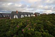 Appartments hidden behind Sylt-Roses (Kamtschatka-Roses).