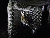 Bird Protection