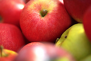 Close up selective focus photograph of a pile of misc. apples