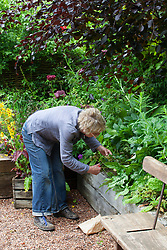 Collecting hellebore seed
