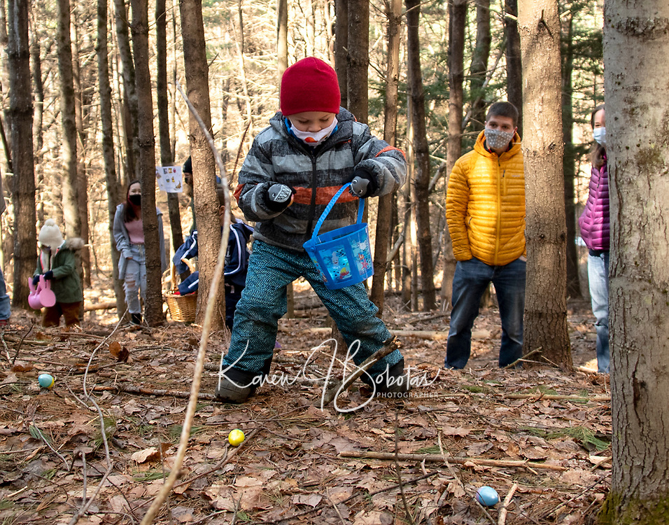 Lukas Gucwa collects Easter eggs along Gilford's Nature Trail during the Egg Hunt and Story Walk Saturday morning.  (Karen Bobotas Photo/for The Laconia Daily Sun)