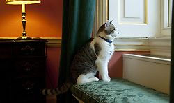 'Larry', the new Downing Street cat, looks out of a window after arriving at 10 Downing Street, London.