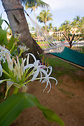 Hyatt Kauai, Poipu, Kauai, Hawaii