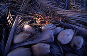Coconuts and palms<br />