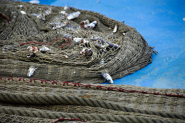 Frankrijk,Sete, 20-9-2008Een vissersnet met resten van gevangen vis uit de middellandse zee ligt op het dek van een vissersboot.A fishingnet with traces of fish caught from the Mediterranean Sea is located on the deck of a fishing boat.Foto: Flip Franssen/Hollandse Hoogte
