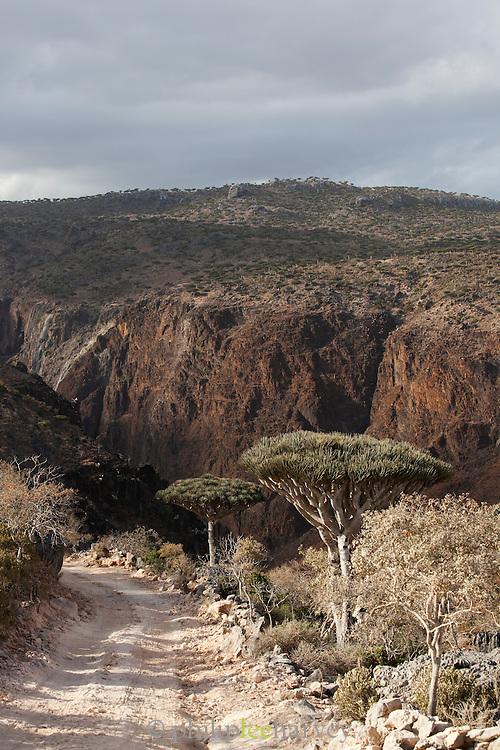Dirt track road leading down a mountainside at Dixsam, Socotra, Yemen