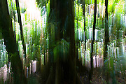 Trees and plants in the Daintree World Heritage Rainforest, Australia