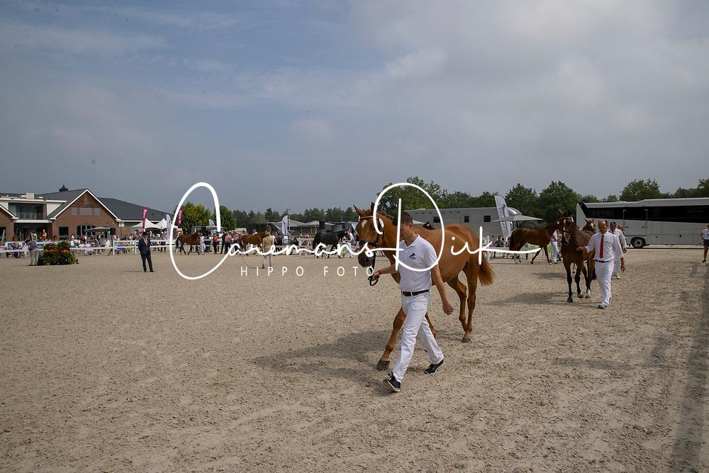 Overview <br /> Nationaal Kampioenschap KWPN<br /> 3 jarige springmerries<br /> © Hippo Foto - Dirk Caremans<br />  15/08/2020