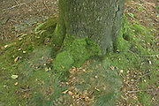 the base of a tree with moss growing on it
