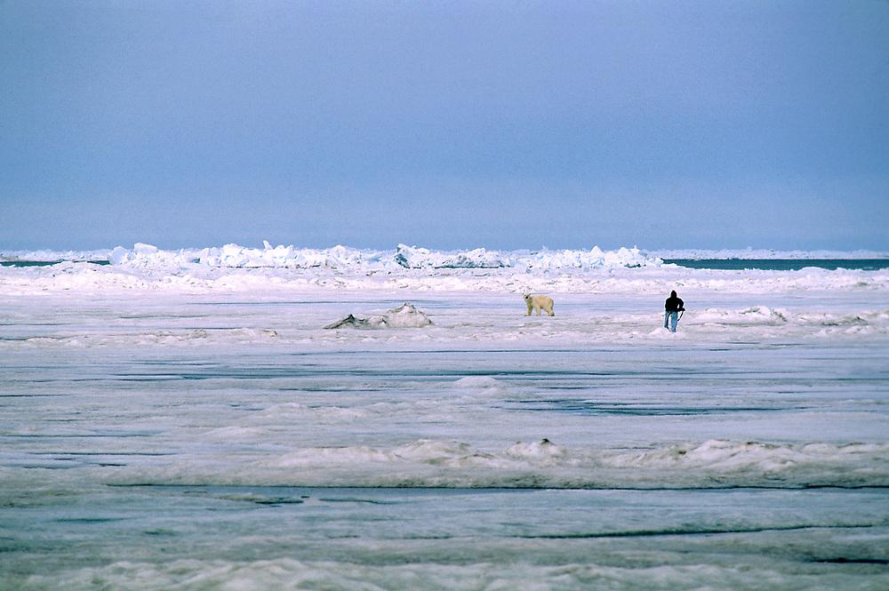 Hunting Polar bears in the Arctic