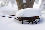Wheelbarrow filled with snow, Green Valley Lake, California USA