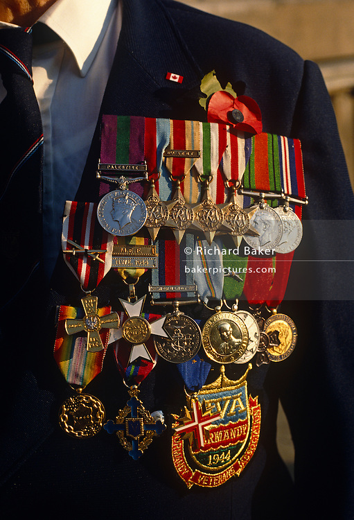 A detail of a second world war Canadian veteran's chest, festooned with gleaming military campaign medals that symbolise an era of conflict, warfare and especially of survival. Seen as a close-up of polished silver, gold and zinc-alloy, we see only the upper body minus the face of this old soldier whose campaigns include the D-Day landings at Normandy in 1944 because at the bottom of his rack of fine insignia is a badge denoting the Normandy Veterans Association. Elsewhere, a medal is worn for service in Palestine. The unseen gentleman wears a Canadian pin at the top and the contribution of his fellow-countrymen as members of the British Commonwealth is recognised in battlefield cemeteries around the world. But on this day, the 11th November, old soldiers like him march past London's Cenotaph to remember friends who did not return from war.