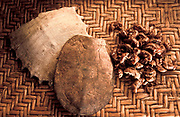 Turtle shells and cicada skins used together with other herbs, barks, flowers leaves, roots,  etc. in the healing process used by the ancient art / science of  Chinese Medicine, China.