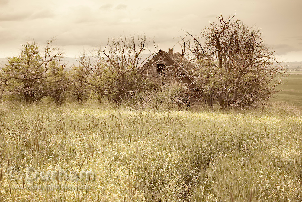 An old, abandoned homestead farm house in Central Washington. Probably abandoned circa 1930's.