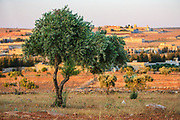The general picture shows an olive tree in the outskirt of Anadan's local livelihood, along with the rest of what resembles a ghost town on Monday, July 16, 2012. It bears the scars from Syrian President Bashar al-Assad's use of military force to crush an opposition movement that has spawned an armed insurgency against his rule. (Photo by Vudi Xhymshiti)