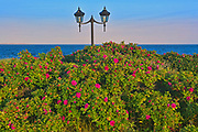 Roses and lights on trail along the North Shore of the Gulf of St. Lawrence<br />Longue-Pointe-de-Mingan<br />Quebec<br />Canada