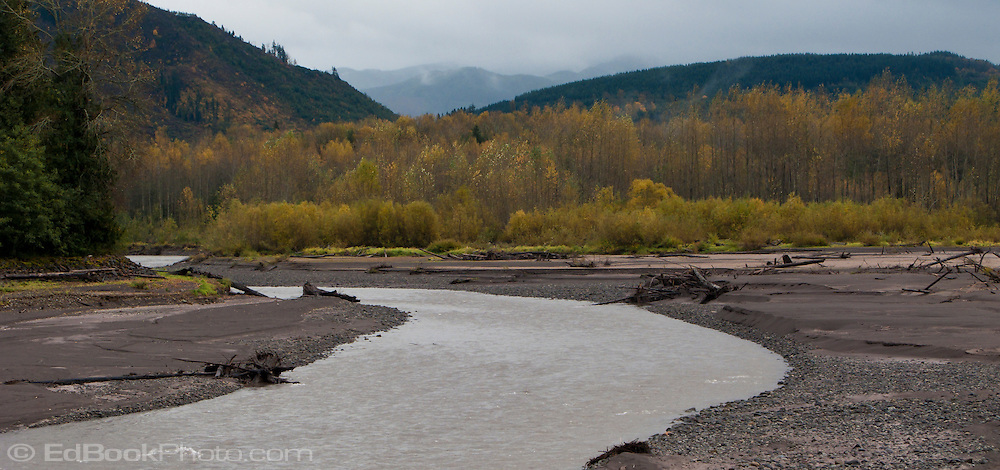 Glacial silt fills the Nisqually River and drift logs litter the banks at Alder Lake with Cottonwood trees and willows in valley show autumn yellow and orange, Washington state, USA pan