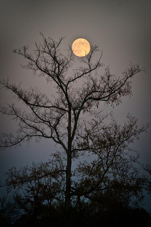 Harvest Moon, Texas Drought, September 2011, Tomball, Texas