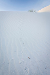Animal tracks on sand dunes at White Sands National Monument, New Mexico, USA.