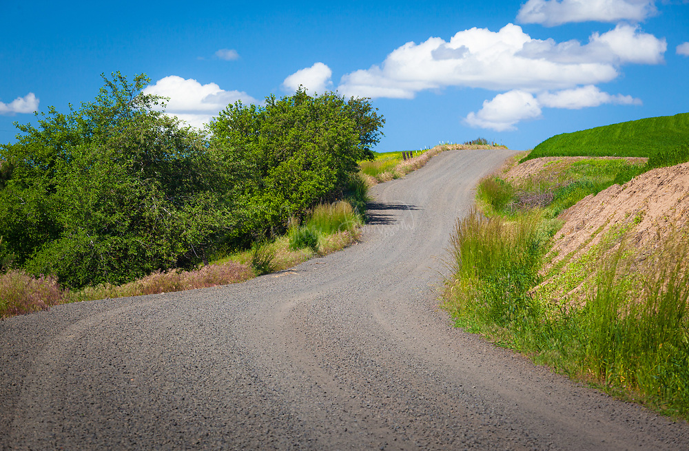 Country road in the Palouse