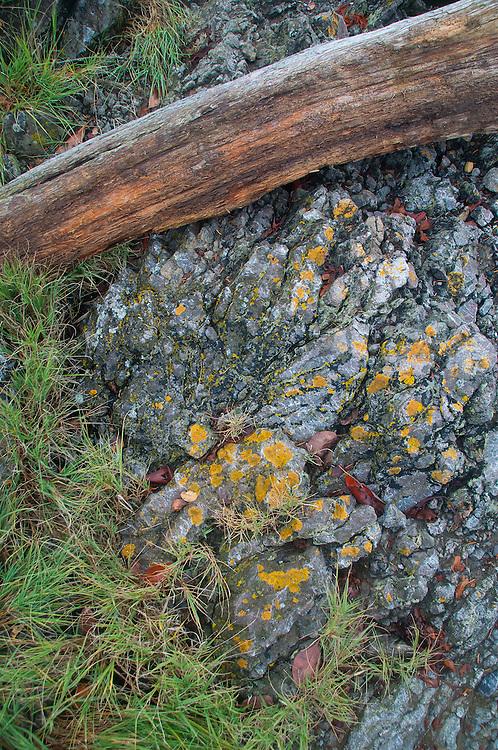 Shoreline Detail, Posey Island, Washington, US