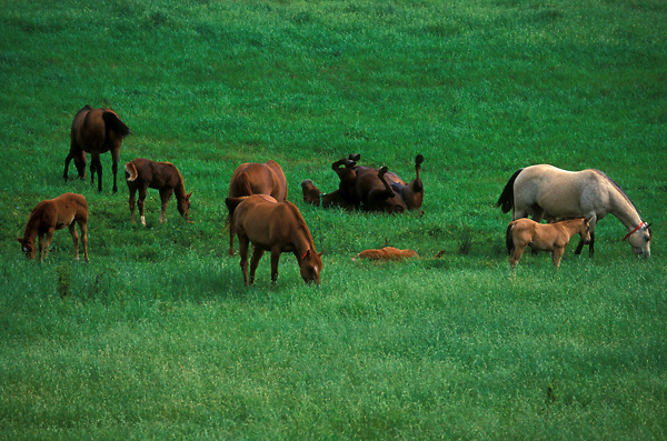 Horses grazing in a rural pasture