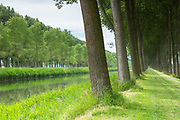 Damse Vaart Canal and picturesque avenue of tall trees canaliside at Damme, province of West Flanders in Belgium