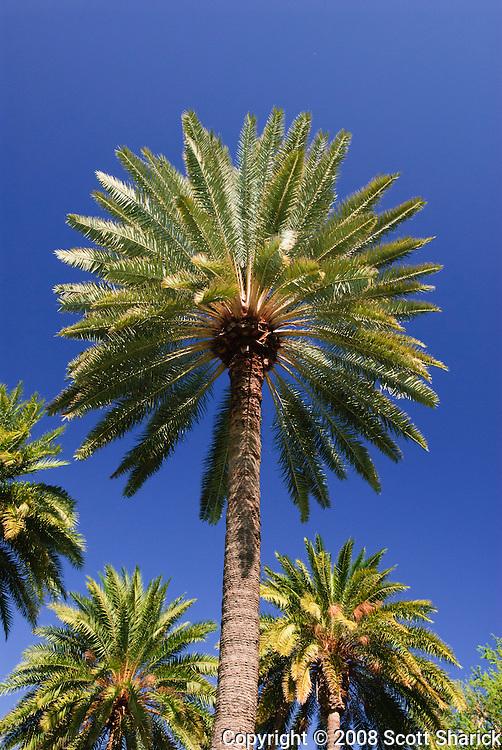 Palm trees in Waikiki, Hawaii.