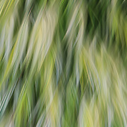 """Ride the Wind""<br />