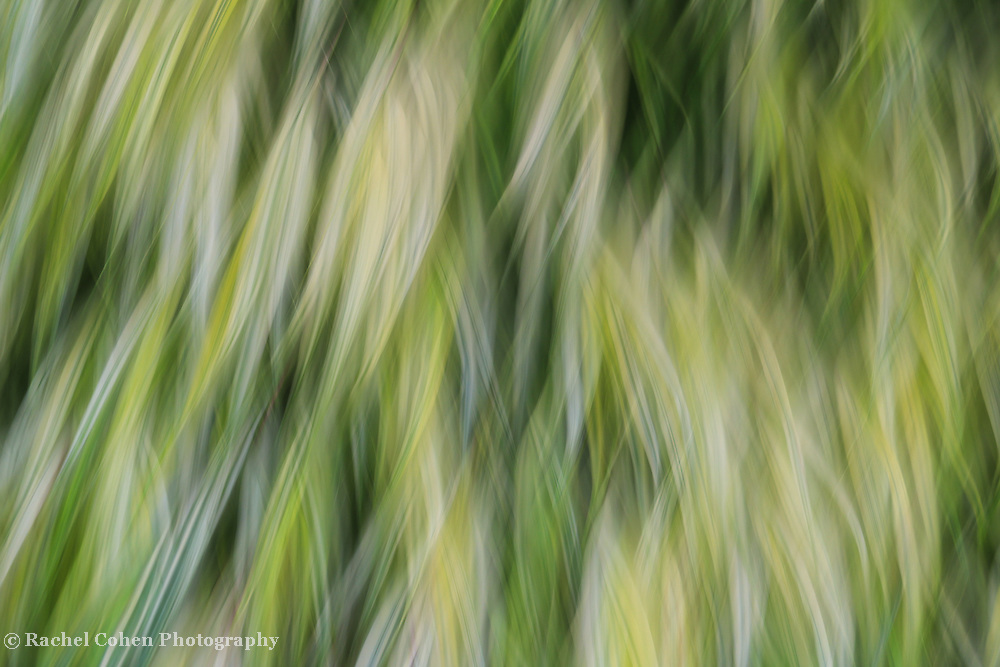"""""""Ride the Wind""""<br /> <br /> A gorgeous nature abstract! Peaceful and flowing in soothing green hues!"""