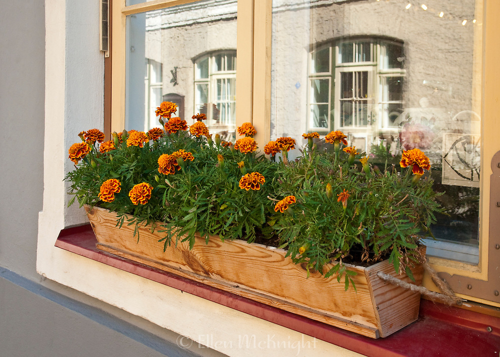 Windowbox in Tallinn, Estonia