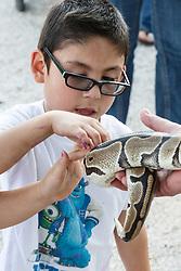 Boy examining snake, Mitchell Lake Audubon Center, San Antonio, Texas, USA.