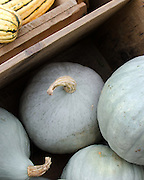 A heritage variety of blue squash in a wooden crate near yellow squash at the Common Ground Fair farmers' market, Maine.