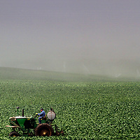 Diffused morning sunshine illuminates an agricultural worker on a tractor as a thick fog bank covers the fields beyond along San Andreas Road in Watsonville, California.<br /> Photo by Shmuel Thaler <br /> shmuel_thaler@yahoo.com www.shmuelthaler.com
