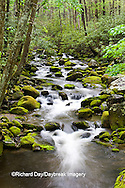 66745-04407 Roaring Fork in spring along Roaring Fork Motor Trail, Great Smoky Mountains National Park, TN