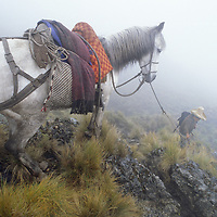 A Peruvian arriero leads his horse along part of the ncient Inca Trail new Unamen village in northern cloud forests of Peru.