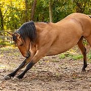 20201116 Jeff Horse