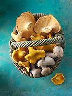Fresh picked wiild  chanterelle or girolle (Cantharellus cibarius), Pied de Mouton Mushrooms (hydnum repandum) or hedgehog mushrooms, Pied Bleu, blewitt or blue foot mushrooms (Clitocybe nuda)