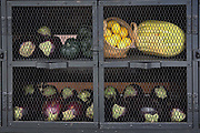 Vegetables in captivity. Ripe cabbages and eggplants are being held in cages by vegetarians