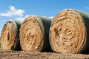 Round hay bales on a farm in rural Mingay, Victoria, Australia. <br /> <br /> Editions:- Open Edition Print / Stock Image