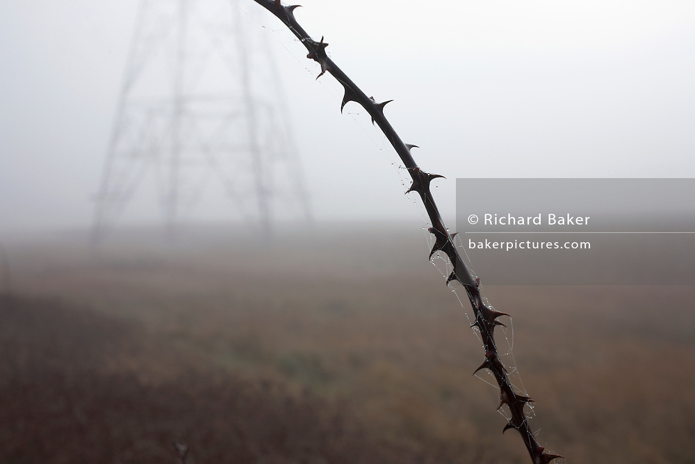 Thorny twig in the foreground near an electricity pylon behind one foggy morning on Botany Marshes, Swanscombe, Kent