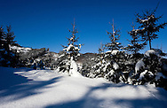 Monitoring wolf, lynx and wildcat populations in Velka Fatra National Park during the winter, with Biosphere Expeditions, Slovakia
