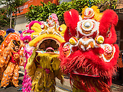 "08 FEBRUARY 2016 - BANGKOK, THAILAND:  Lion dancers wait to perform in Bangkok's Chinatown district during the celebration of the Lunar New Year. Chinese New Year is also called Lunar New Year or Tet (in Vietnamese communities). This year is the ""Year of the Monkey."" Thailand has the largest overseas Chinese population in the world; about 14 percent of Thais are of Chinese ancestry and some Chinese holidays, especially Chinese New Year, are widely celebrated in Thailand.      PHOTO BY JACK KURTZ"