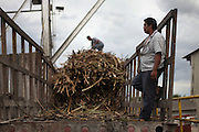 Ervin Villanueva (forefront), 41, sugar cane farmer from Libertad, Corozal, and BSCFA surveillance committee member, looks on at the mechanical cranes as Victor Chan, 23, also a sugar cane farmer from Libertad, prepares a sugar cane bundle from a truck before it is picked up by a mechanical crane at the Belize Sugar Industries Factory, facility that processes all of the BSCFA's sugar cane. Belize Sugar Cane Farmers Association (BSCFA). Belize Sugar Industries Factory, Orange Walk, Belize. January 22, 2013.