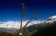 High in the mountains is a lone tree stands as testament to the deforestation problem in the Himalayas, wood used for tourist showers. Communities here partly-depend on the agriculture of rice-growing but also on the passing tourist trade. Western trekkers from all over the world walk through these tiny communities on their way up the series of climbing trails of the Annapurna Conservation Sanctuary circuit, a sometimes rigorous walk from the low hills of Pokhara to the higher altitudes of Annapurna, the (26,000 feet (8,000 metre) peak. To be greeted by so much choice is the most rewarding experience and the offer of hot showers is about the best reward for so much exertion.